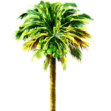Coconut palm tree isolated, watercolor illustration Royalty Free Stock Photo