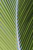 Coconut palm tree leaf Stock Image