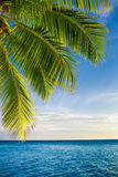 Coconut palm tree leaves over endless ocean Royalty Free Stock Photos