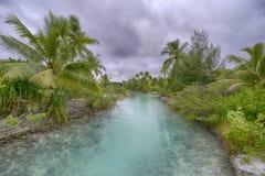 Coconut Palm Tree Moorea Beach French Polynesia Royalty Free Stock Photos