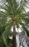 Coconut palm stock photos