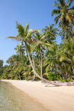 Coconut palm tree over luxury beach Royalty Free Stock Photo