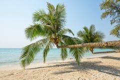 Coconut palm tree over luxury beach Stock Photo