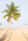 Coconut palm tree over luxury beach. Thailand Royalty Free Stock Photo