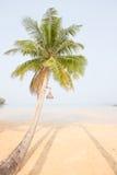 Coconut palm tree over luxury beach Royalty Free Stock Photo