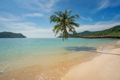 Coconut palm tree over summer beach sea in Phuket ,Thailand. Sum Stock Photos