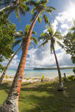 Coconut Palm Tree over tropical white sand beach Royalty Free Stock Photo