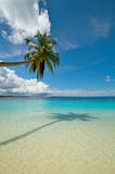 Coconut palm tree on perfect tropical beach Stock Photography