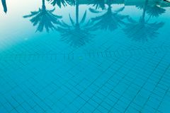 Coconut palm tree reflection on the swimming pool. Background Stock Photography