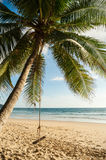 Coconut palm tree with sand beach. And blue sea in blue sky background Stock Image
