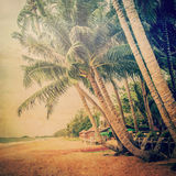 Coconut palm tree on sand beach with vintage Royalty Free Stock Photography