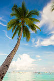 Coconut Palm tree on the sandy beach background Stock Image