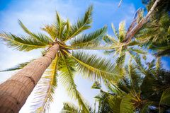 Coconut Palm tree on the sandy beach background Stock Photo
