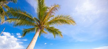 Coconut Palm tree on the sandy beach background Royalty Free Stock Photos