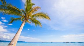 Coconut Palm tree on the sandy beach background Stock Images