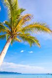 Coconut Palm tree on the sandy beach background Royalty Free Stock Photo