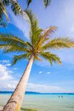 Coconut Palm tree on the sandy beach background Stock Photography