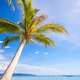 Coconut Palm tree on the sandy beach background Stock Photos