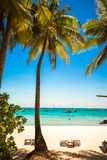 Coconut Palm tree on the sandy beach in exotic Stock Images
