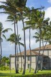 Coconut Palm tree on the sandy beach in Hawaii, Kauai Royalty Free Stock Photo