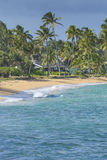 Coconut Palm tree on the sandy beach in Hawaii, Kauai Royalty Free Stock Image