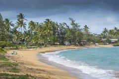 Coconut Palm tree on the sandy beach in Hawaii, Kauai Stock Image