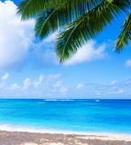 Coconut Palm tree on the sandy beach in Hawaii, Kauai Royalty Free Stock Images