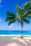 Coconut Palm tree on the sandy beach in Hawaii, Kauai Royalty Free Stock Photography