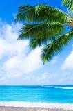 Coconut Palm tree on the sandy beach in Hawaii, Kauai royalty free stock photos
