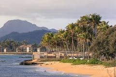 Coconut Palm tree on the sandy beach in Kapaa Hawaii, Kauai Royalty Free Stock Images