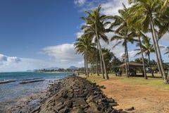 Coconut Palm tree on the sandy beach in Kapaa Hawaii, Kauai Stock Images