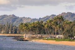 Coconut Palm tree on the sandy beach in Kapaa Hawaii, Kauai Stock Photography