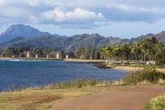 Coconut Palm tree on the sandy beach in Kapaa Hawaii, Kauai Royalty Free Stock Photography