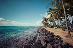 Coconut Palm tree on the sandy beach in Kapaa Hawaii, Kauai Royalty Free Stock Images