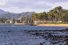 Coconut Palm tree on the sandy beach in Kapaa Hawaii, Kauai Royalty Free Stock Image