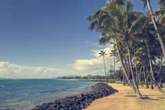 Coconut Palm tree on the sandy beach in Kapaa Hawaii, Kauai Royalty Free Stock Photography