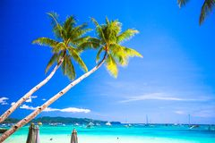 Coconut Palm tree on the sandy beach in Stock Photography