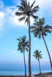 Coconut Palm tree on the sandy beach Stock Photos