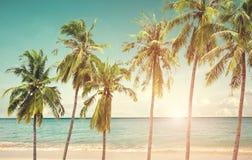 Coconut palm tree on seaside beac. H at summer season Royalty Free Stock Photo