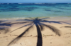 Coconut palm tree shade on tropical beach Stock Image