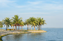 Coconut palm tree on the shore Stock Photography