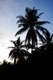 Coconut Palm Tree Silhouette Royalty Free Stock Photo