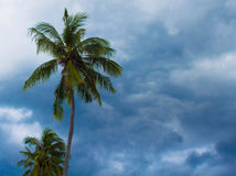 Coconut palm tree silhouette on cloudy sky background. Green leaves on wind. Tropical garden. Natural backdrop for exotic vacation, paradise life. Horizontal stock image