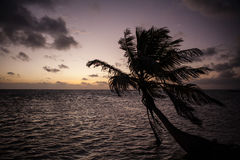 Coconut Palm Tree Silhouette Stock Photography