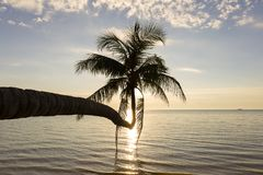 Coconut palm tree silhouette and sea water wave at sunset Royalty Free Stock Photo