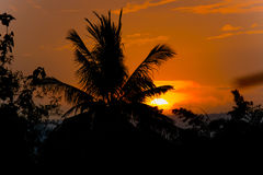 Coconut palm tree silhouette at sunset background Stock Image