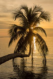 Coconut palm tree silhouette at sunset Royalty Free Stock Photo