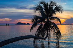 Coconut palm tree silhouette at sunset Stock Photography