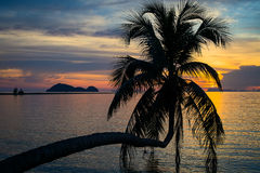 Coconut palm tree silhouette at sunset. Koh Phangan island, Thailand Royalty Free Stock Image