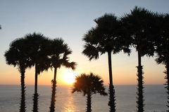 Coconut palm tree silhouette. Sunset Royalty Free Stock Photo